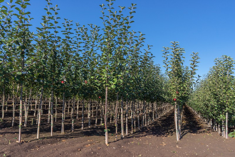 La Verne Nursery Began In The Early 1970 S When Ter Lodder Grafting Ornamental Pears At Night On His Kitchen Table California