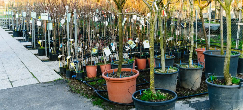 Where to buy La Verne Nursery Products