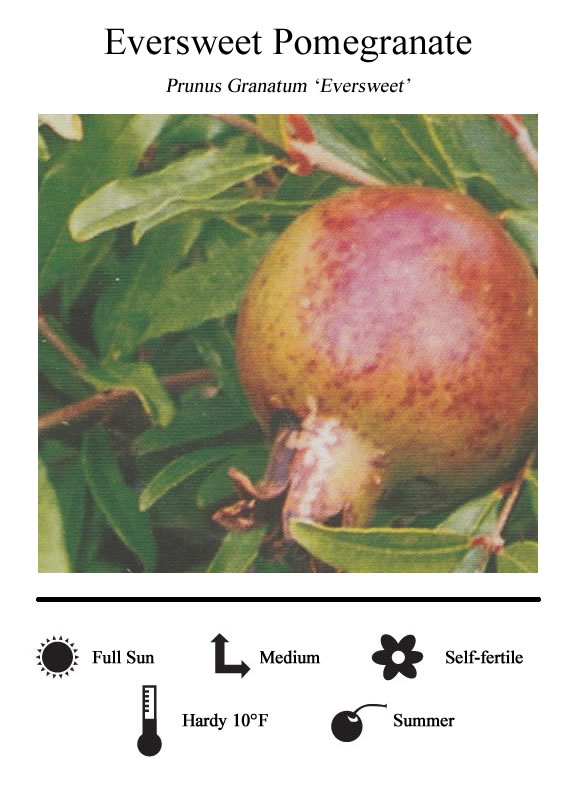 La Verne Nursery - Pomegranate Eversweet (Prunus granatum)